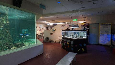 淡島水族館