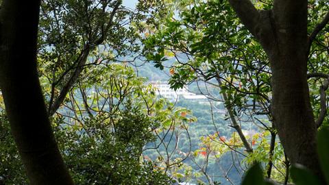 淡島神社への山道から見た長井崎