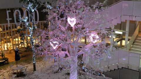 コクーン新都心の中にあった木