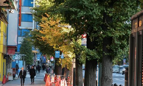銀杏並木がきれいな季節